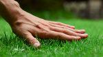 grass-001